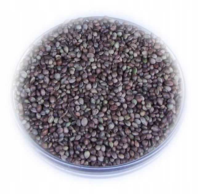 Konopie nasiona ziarno 5,0 kg