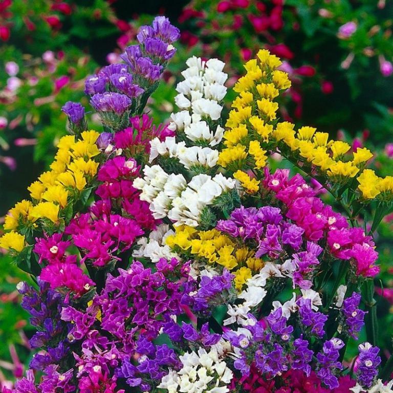 Купить однолетние цветы москва, магазин цветы