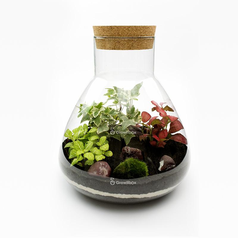 Las w słoiku - zestaw 4 mossarium, Growitbox