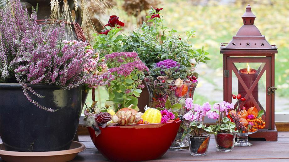 Ogród Na Balkonie Pomysły Na Jesień I Zimę Allegropl