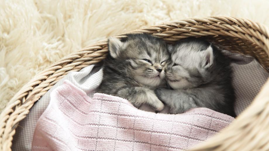 Populárne mačacie postele