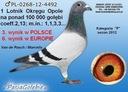 Gołębie pocztowe od Wielokrotnego Mistrza Płeć Samica Samiec
