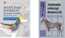 Anatomia zwierząt do kolorowania + Repetytorium