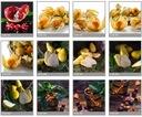 Panel szklany kuchnia 60x60 lakobel fotolia Przeznaczenie kuchnia