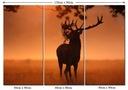 Obraz Łowiectwo Zwierzęta Leśne Jeleń Poroże