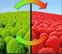 Огненная трава ЛЕТОМ зеленый ОСЕНЬЮ красная