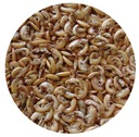 Gammarus Kiełż suszony pokarm dla ryb, krewetek