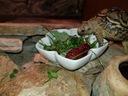 żółw  terrarium