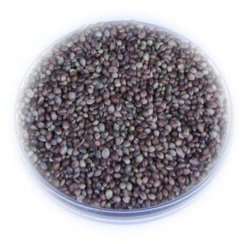 Семена конопли зерновые 5,0 кг