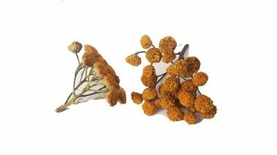Wrotycz kwiat wrotyczu 250g Zioła z Kurpi pasożyty