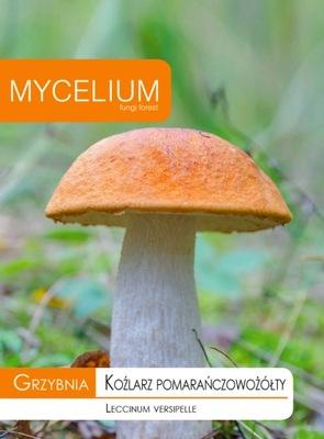 Мицелий  оранжевый-желтый день