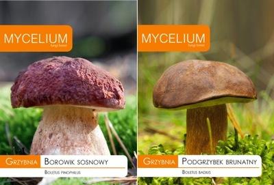 Мицелий комплект Боровик сосновый + польский гриб
