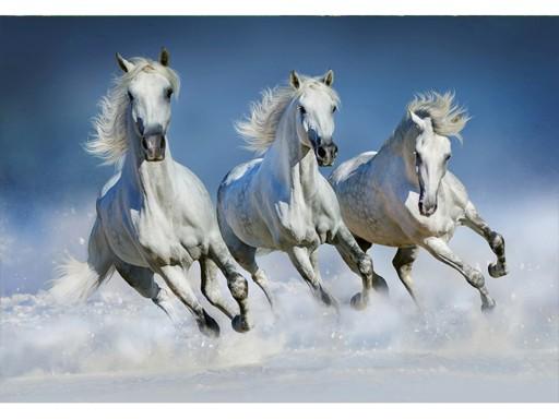Fototapeta Białe Konie Arabskie Klej W Zestawie 7175444081 Allegropl