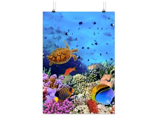 Plakat Rafa Koralowa 100x130 Cm 9 Wzorów Matowy